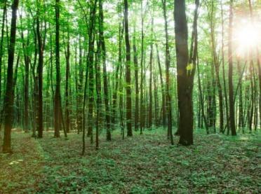 Posadź las - weź pieniądze z PROW!