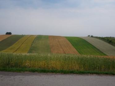 Płodozmian w rolnictwie ekologicznym - dobre praktyki