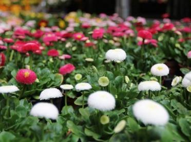 Idzie wiosna, więc kupujemy kwiaty