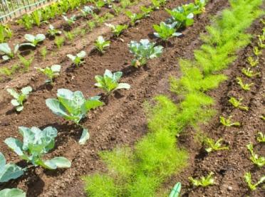 Jak sadzić rośliny? Dobrzy i źli sąsiedzi w ogrodzie
