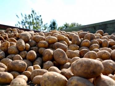 Przechowywanie ziemniaków - wskazówki, które musisz wziąć pod uwagę
