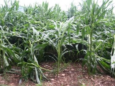 Pomoc dla poszkodowanych rolników - trwa nabór wniosków