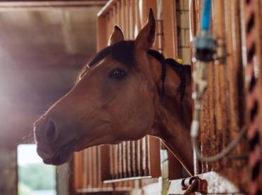Jak właściwie zbadać konia przed zakupem?