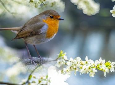 Jak długo żyją ptaki?