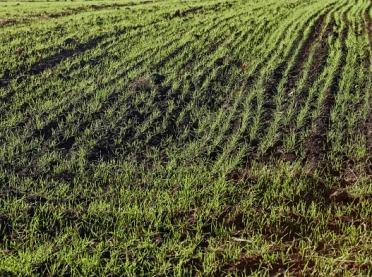 Zaprawa - podstawa ochrony roślin