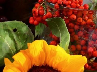 Zapomniane owoce - odkrywamy prawdziwe skarby natury!
