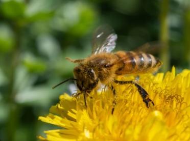 Pszczoły już pracują