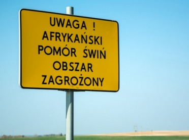 Początek maja i tysiąc przypadków ASF w Polsce