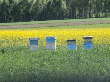 PIORiN: Chroniąc rośliny, chrońmy pszczoły