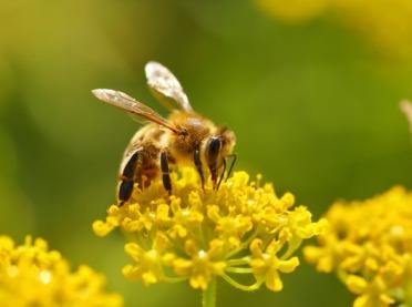 Jak pomóc pszczołom?