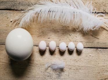 Wielkie jaja... strusie - czy warto je jeść?
