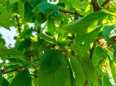 Skuteczna ochrona drzew owocowych przed szkodnikami
