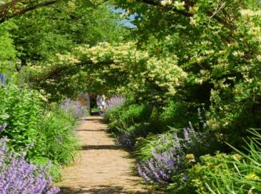 Pnącza - rośliny, które otulą Twój ogród