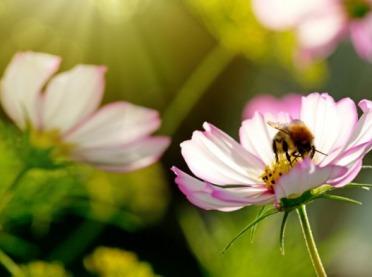 """Fabryka Cukierków """"Pszczółka"""" ratuje pszczoły"""