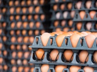 Rynek jaj – konkurencja rośnie Polsce pod bokiem