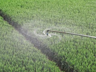 Odchwaszczanie zbóż jarych i ozimych
