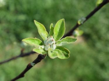 Biologiczne metody walki ze szkodnikami upraw