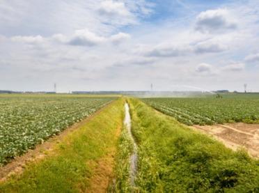 Jak zminimalizować skutki suszy?