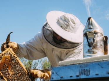 Pierwsze miody zebrane - czy pszczelarze są zadowoleni?