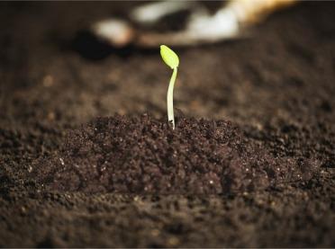 Wszystko, co musisz wiedzieć o bakteriach glebowych