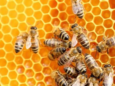 Co Ty wiesz o pszczołach?