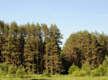 Sucho w lasach - uwaga na pożary!