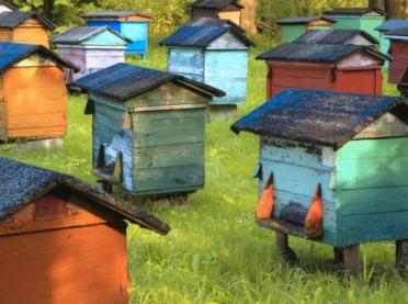 Więcej pieniędzy na wsparcie pszczelarstwa