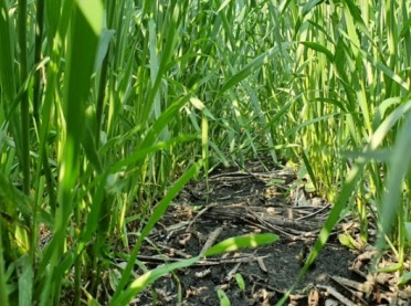 Jakie rośliny na kwaśne gleby?