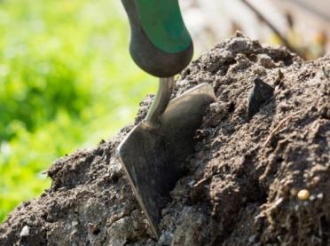 O roli próchnicy w glebie