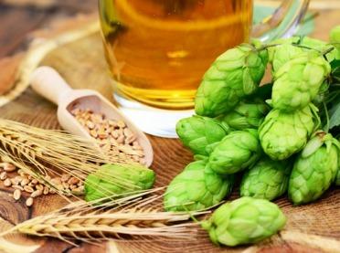 Polacy pokochali piwa bezalkoholowe. Problemem jest jakość chmielu