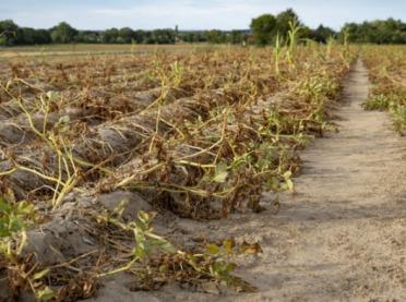 Raport Koalicji Klimatycznej – rolnictwo w obliczu suszy a bezpieczeństwo żywnościowe