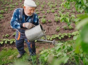 Raporty suszowe IUNG - czy są krzywdzące dla rolników?