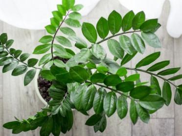Rośliny do domu dla zabieganych