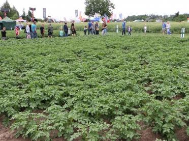 Wokół ziemniaka... spotkania, imprezy, konkursy