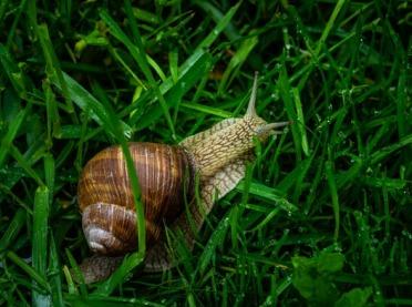 A może ślimaki? Zgłoszenia na wyjazd studyjny do 5 sierpnia