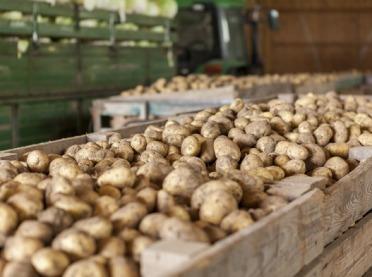 Nowoczesna przechowalnia ziemniaków w hali stalowej – zobacz, dlaczego to się opłaca!