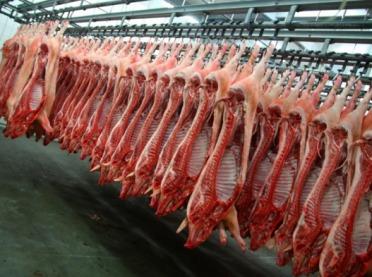 Producenci świń i zakłady mięsne w potrzasku ASF?