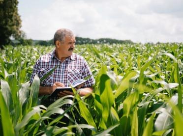 Szacowanie strat bezpośrednio u rolnika?