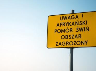 Żółta strefa ASF w Łódzkiem. Chcą odstrzelenia wszystkich dzików