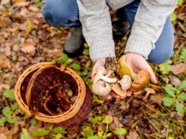Zbieranie grzybów - jak rozpoznać te jadalne?