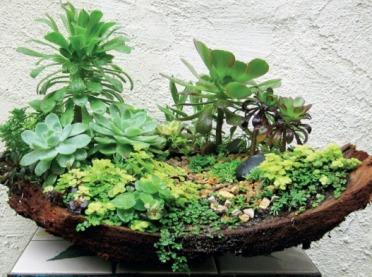 Ogród w miniaturze. Coś wyjątkowego dla każdego!