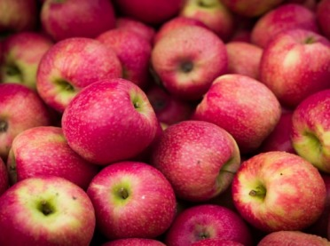 Jabłka z Europy – wizyta w Polsce przedstawicieli ze Zjednoczonych Emiratów Arabskich