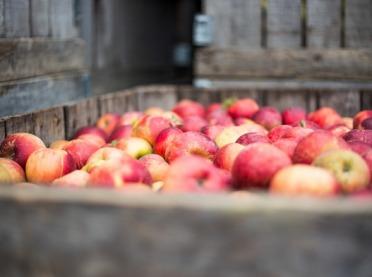 Jabłek jest mniej - a co z cenami?