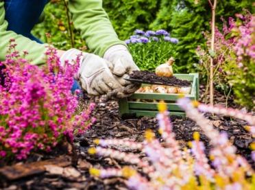 Jesień w przydomowym ogrodzie - te prace musisz wykonać teraz!