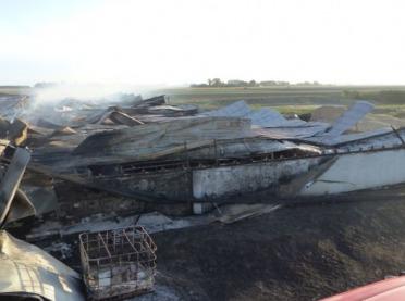 Potężny pożar chlewni. Spłonęło ponad 2500 świń