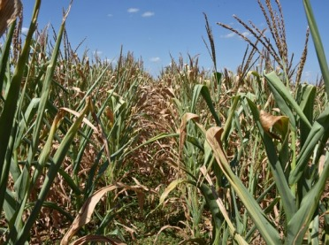 Bilans wodny poprawia się. Monitoring suszy rolniczej trwa