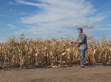 Monitoring suszy - zbyt wolny i niesprawiedliwy
