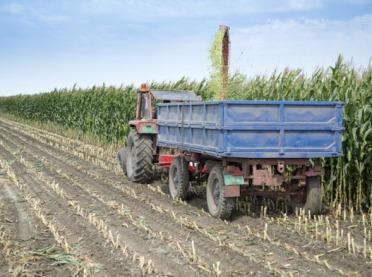 Kukurydziane żniwa - jak przebiegają?