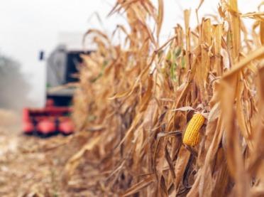 Znów śruby w kukurydzy. Tym razem na Pomorzu