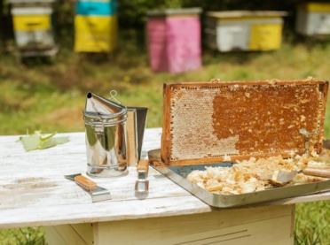 Polskie pszczelarstwo w liczbach